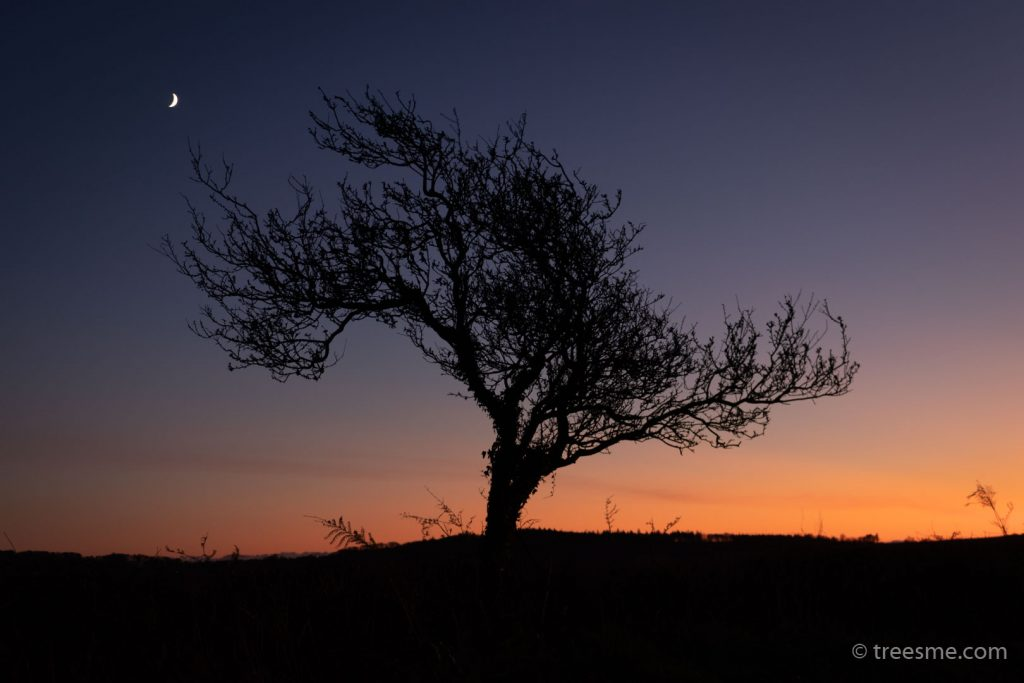 First day of Winter and the Leafless Tree Stands Proud