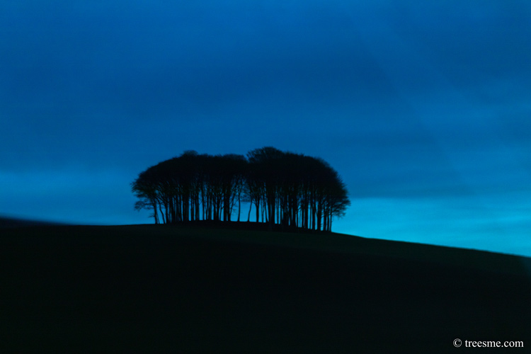 Those Trees (Cookworthy knapp)