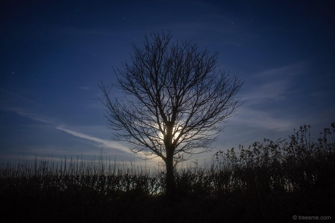 Natural Moonlight